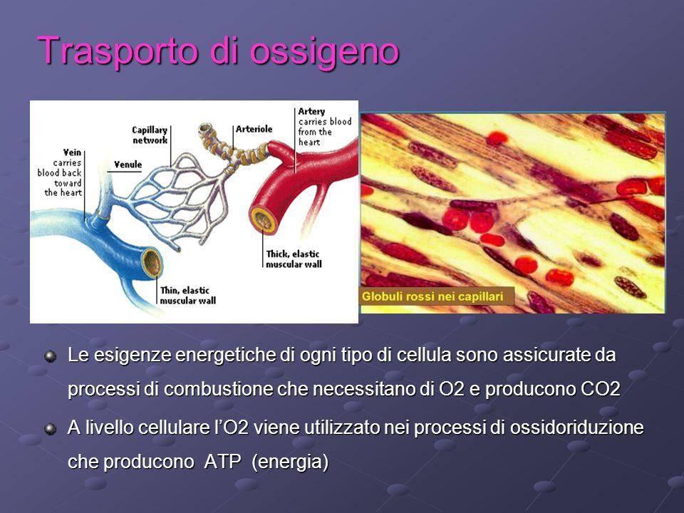 Trasporto di ossigeno Le esigenze energetiche di ogni tipo di cellula sono assicurate da processi di combustione che necessitano di O2 e producono CO2