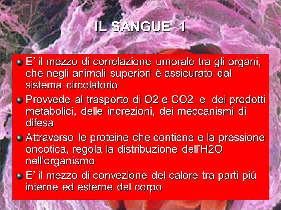 IL SANGUE 1 E il mezzo di correlazione umorale tra gli organi, che negli animali superiori è assicurato dal sistema circolatorio Provvede al trasporto