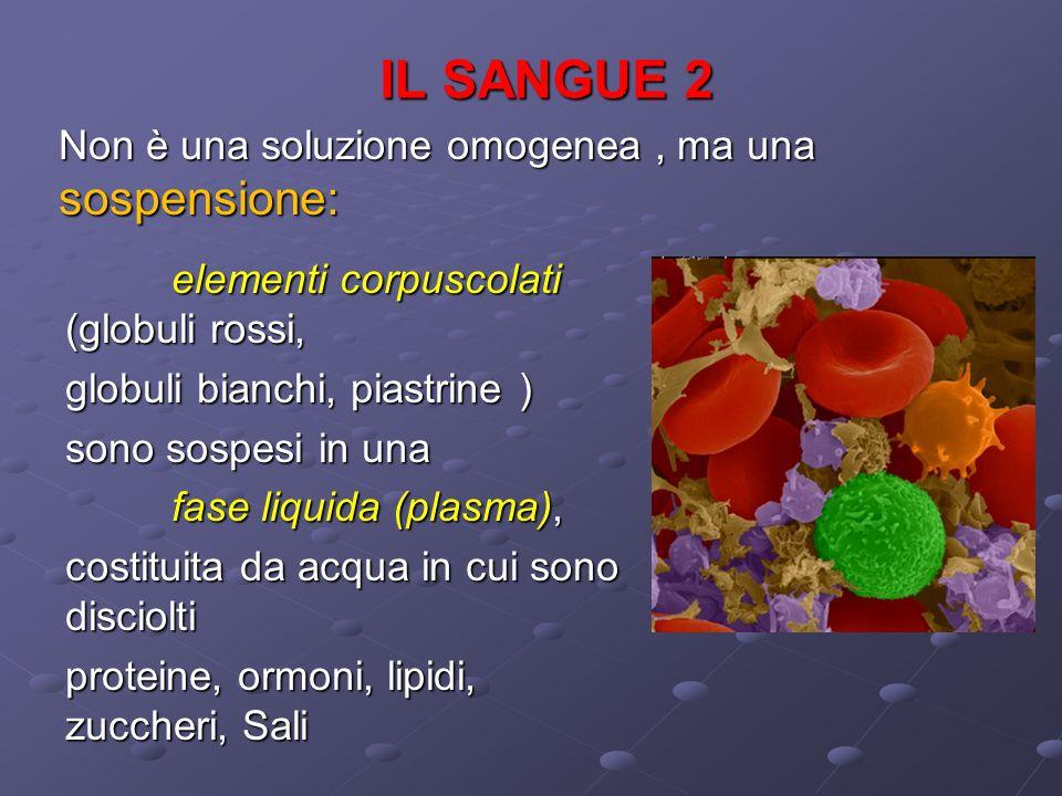 IL SANGUE 2 elementi corpuscolati (globuli rossi, globuli bianchi, piastrine ) sono sospesi in una fase liquida (plasma), costituita da acqua in cui s