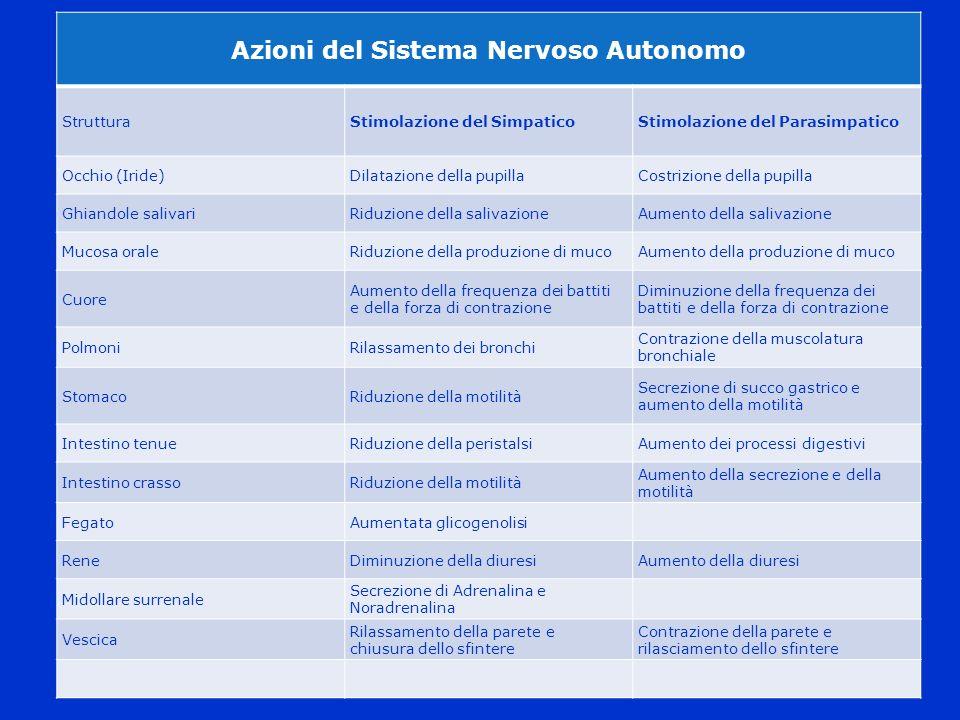 Azioni del Sistema Nervoso Autonomo StrutturaStimolazione del SimpaticoStimolazione del Parasimpatico Occhio (Iride)Dilatazione della pupillaCostrizio