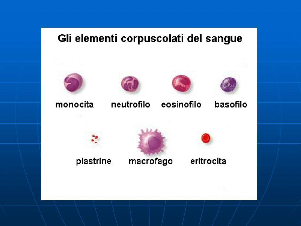 Emopoiesi 1 Emopoiesi prenatale :comprende la genesi delle cellule circolanti e dei tessuti emopoietici Emopoiesi prenatale :comprende la genesi delle cellule circolanti e dei tessuti emopoietici Emopoiesi post-natale :rigenerazione degli elementi sanguigni, che sono labili e a vita breve.