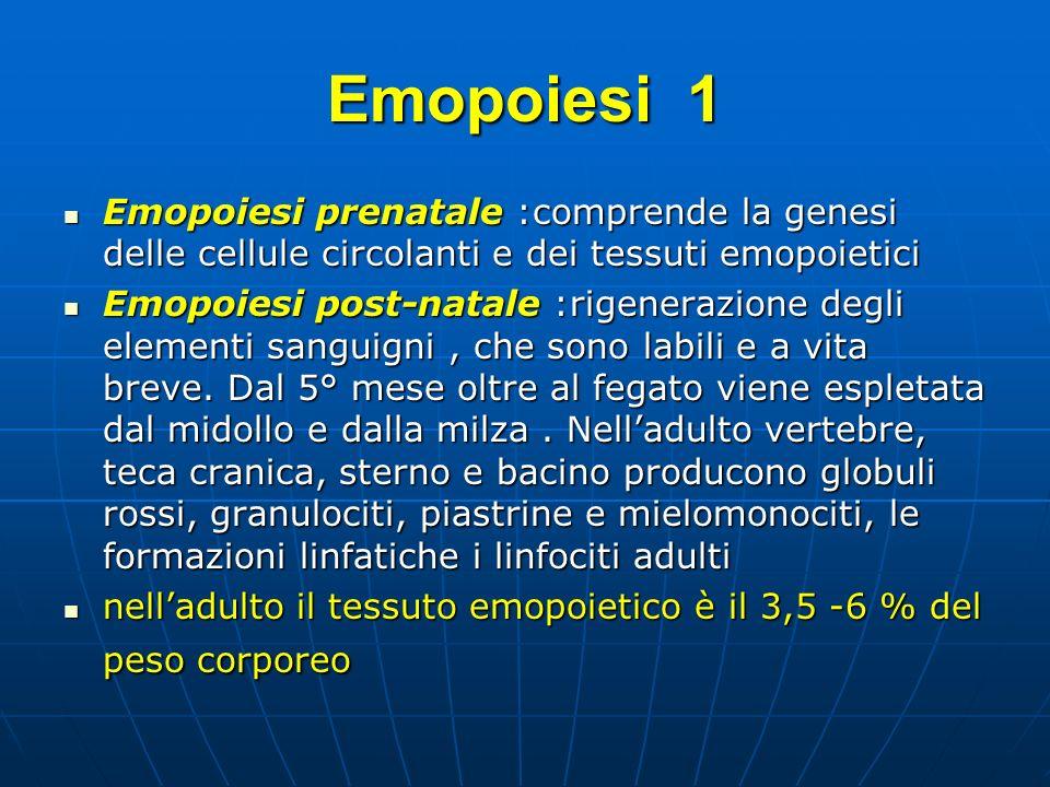 EMOPOIESI 2 Normalmente tra lelaborazione della I° cellula differenziata di ogni serie e limmissione nel sangue circolante passano 3-5 giorni Normalmente tra lelaborazione della I° cellula differenziata di ogni serie e limmissione nel sangue circolante passano 3-5 giorni Data la durata limitata delle cellule ematiche, lemopoiesi è un processo continuo Data la durata limitata delle cellule ematiche, lemopoiesi è un processo continuo In condizioni normali ogni giorno vengono immessi in circolo circa 20 cc di globuli rossi In condizioni normali ogni giorno vengono immessi in circolo circa 20 cc di globuli rossi