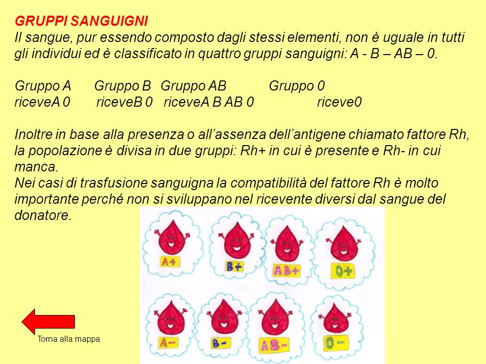 GRUPPI SANGUIGNI Il sangue, pur essendo composto dagli stessi elementi, non è uguale in tutti gli individui ed è classificato in quattro gruppi sangui