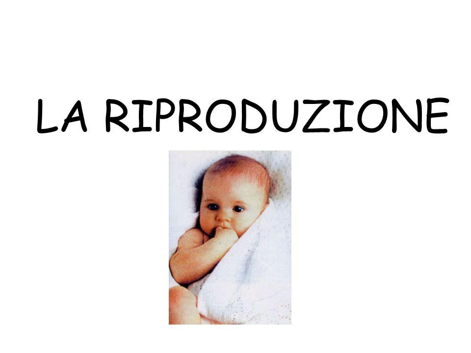 La gravidanza Il feto Al termine del secondo mese di gravidanza inizia lo sviluppo fetale Il miracolo della vita