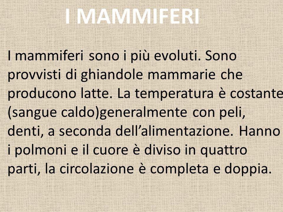 I mammiferi sono i più evoluti.Sono provvisti di ghiandole mammarie che producono latte.