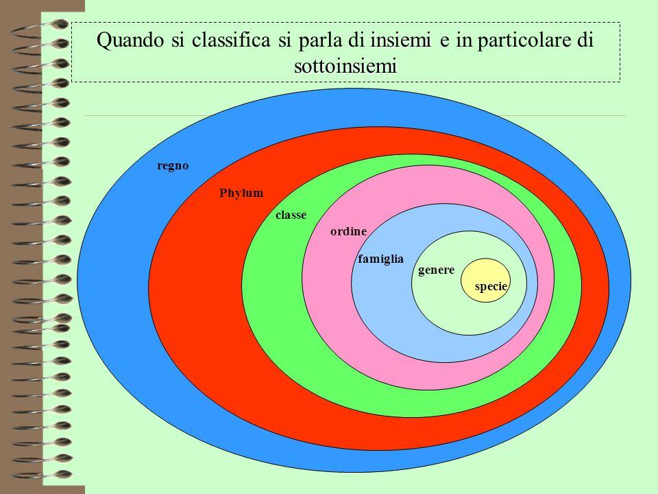 specie genere famiglia ordine classe Phylum regno insiemi sottoinsiemi Quando si classifica si parla di insiemi e in particolare di sottoinsiemi