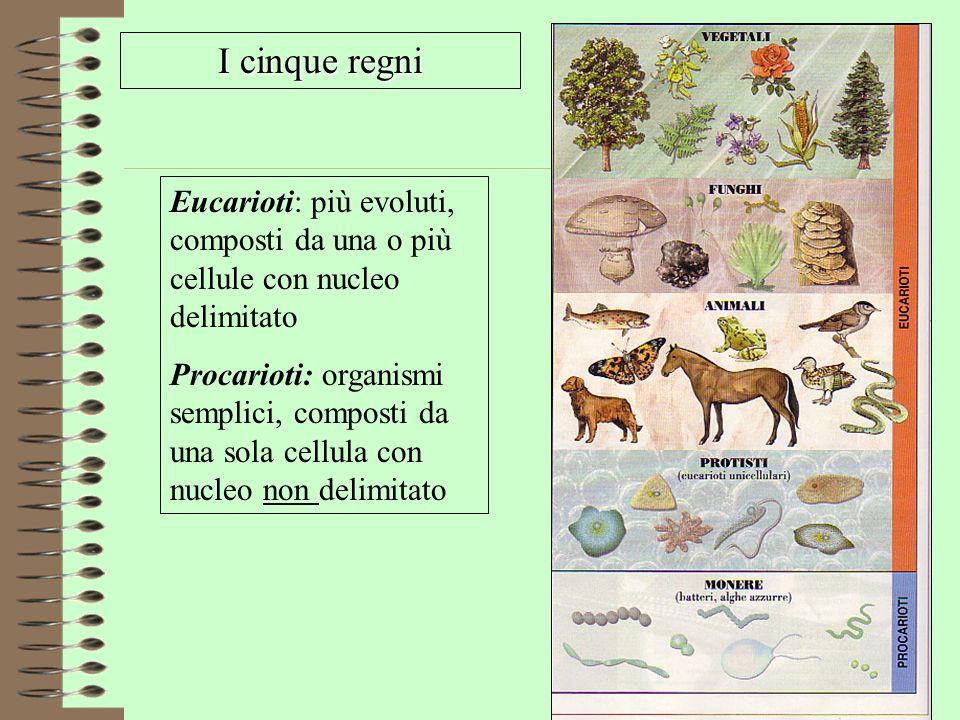 I cinque regni Eucarioti: più evoluti, composti da una o più cellule con nucleo delimitato Procarioti: organismi semplici, composti da una sola cellul