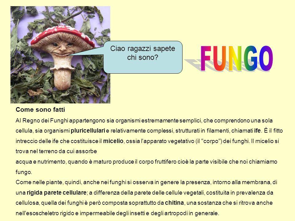 Come sono fatti Al Regno dei Funghi appartengono sia organismi estremamente semplici, che comprendono una sola cellula, sia organismi pluricellulari e