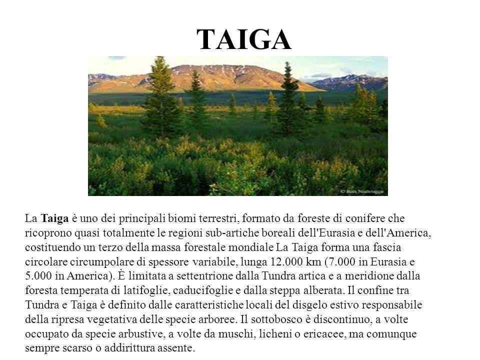 TAIGA La Taiga è uno dei principali biomi terrestri, formato da foreste di conifere che ricoprono quasi totalmente le regioni sub-artiche boreali dell