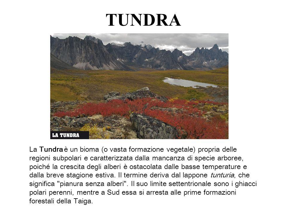 TUNDRA La Tundra è un bioma (o vasta formazione vegetale) propria delle regioni subpolari e caratterizzata dalla mancanza di specie arboree, poiché la