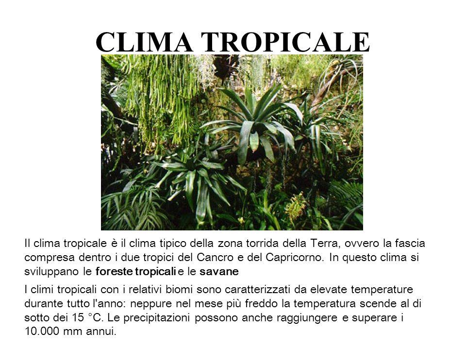 CLIMA TROPICALE Il clima tropicale è il clima tipico della zona torrida della Terra, ovvero la fascia compresa dentro i due tropici del Cancro e del C