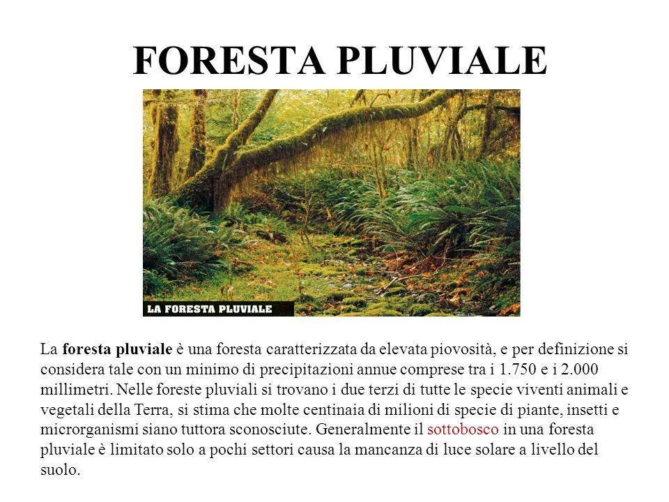 FORESTA PLUVIALE La foresta pluviale è una foresta caratterizzata da elevata piovosità, e per definizione si considera tale con un minimo di precipita