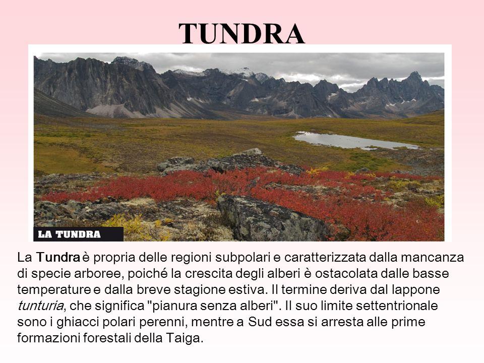 TUNDRA La Tundra è propria delle regioni subpolari e caratterizzata dalla mancanza di specie arboree, poiché la crescita degli alberi è ostacolata dalle basse temperature e dalla breve stagione estiva.