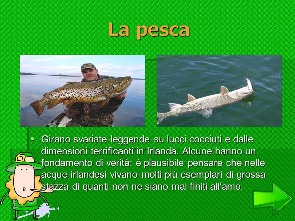 La pesca La pesca Girano svariate leggende su lucci cocciuti e dalle dimensioni terrificanti in Irlanda. Alcune hanno un fondamento di verità: è plaus