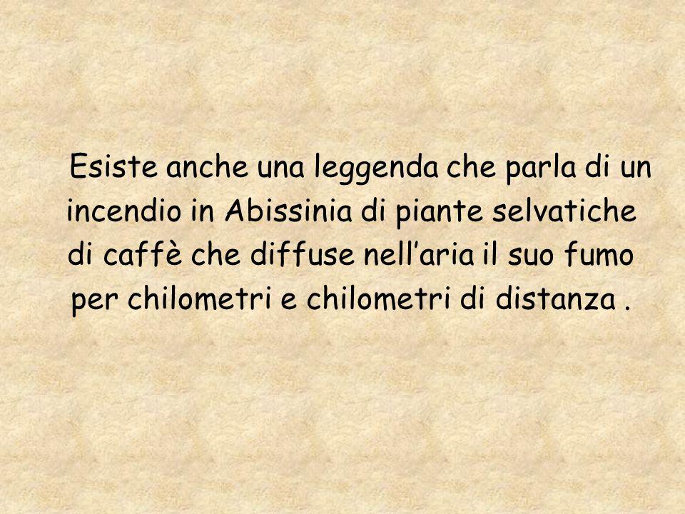 Esiste anche una leggenda che parla di un incendio in Abissinia di piante selvatiche di caffè che diffuse nell aria il suo fumo per chilometri e chilo