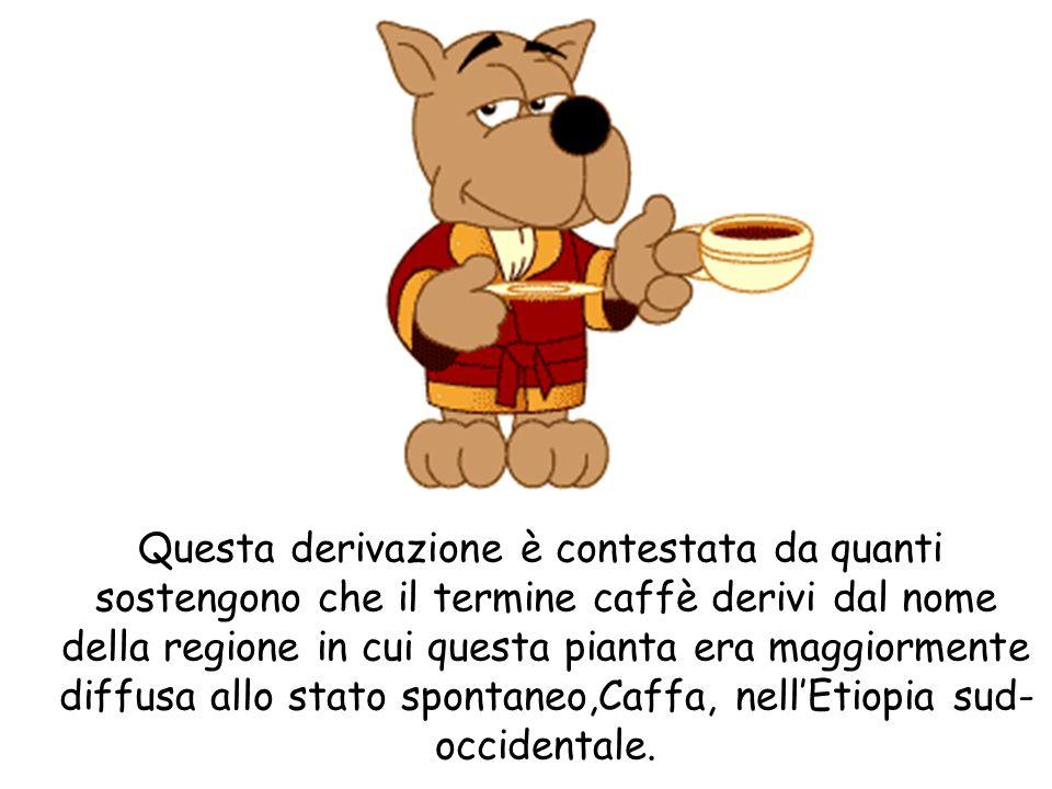 Questa derivazione è contestata da quanti sostengono che il termine caffè derivi dal nome della regione in cui questa pianta era maggiormente diffusa
