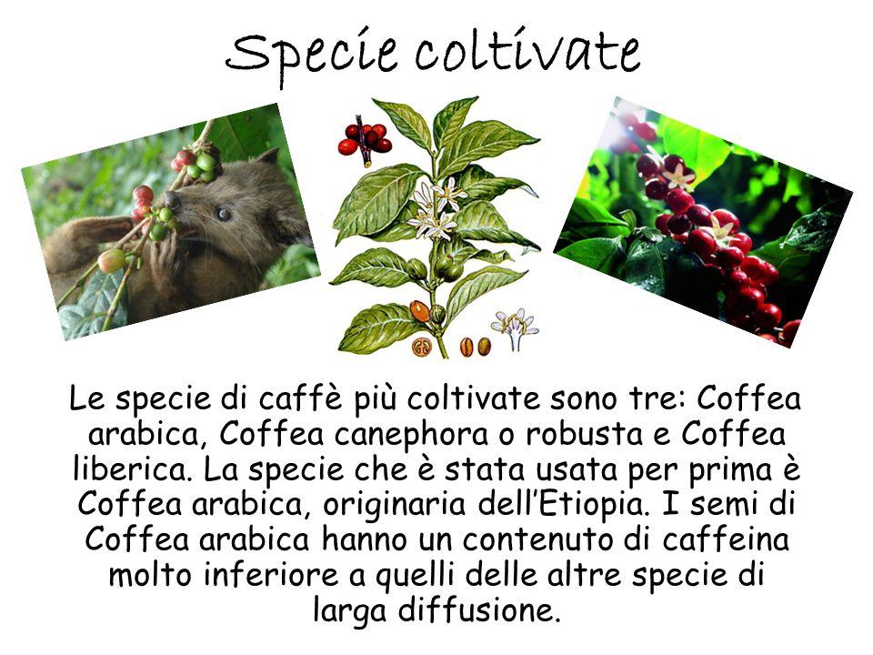 Specie coltivate Le specie di caffè più coltivate sono tre: Coffea arabica, Coffea canephora o robusta e Coffea liberica. La specie che è stata usata