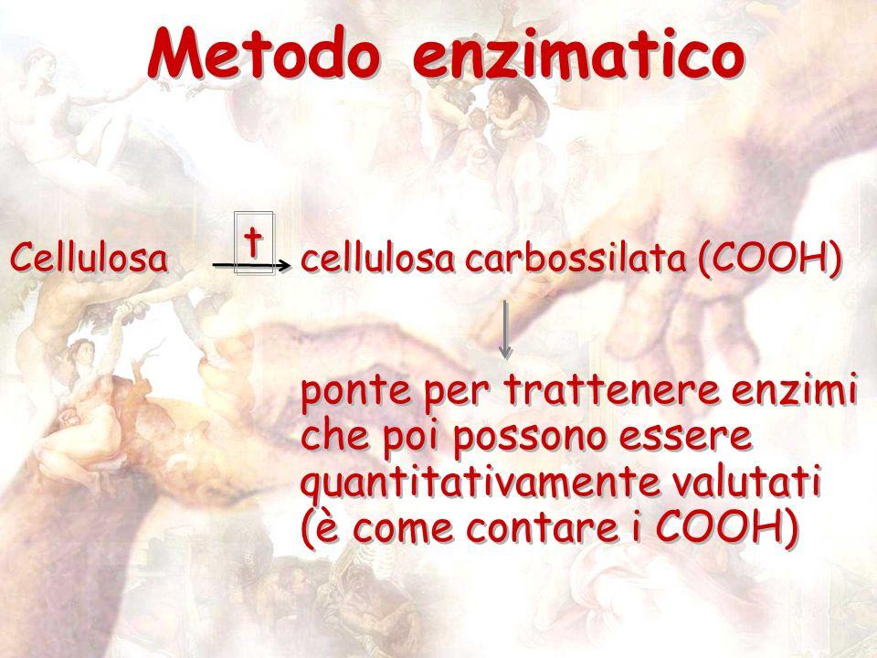 Metodo enzimatico Cellulosacellulosa carbossilata (COOH) ponte per trattenere enzimi che poi possono essere quantitativamente valutati (è come contare i COOH) Cellulosacellulosa carbossilata (COOH) ponte per trattenere enzimi che poi possono essere quantitativamente valutati (è come contare i COOH) t t