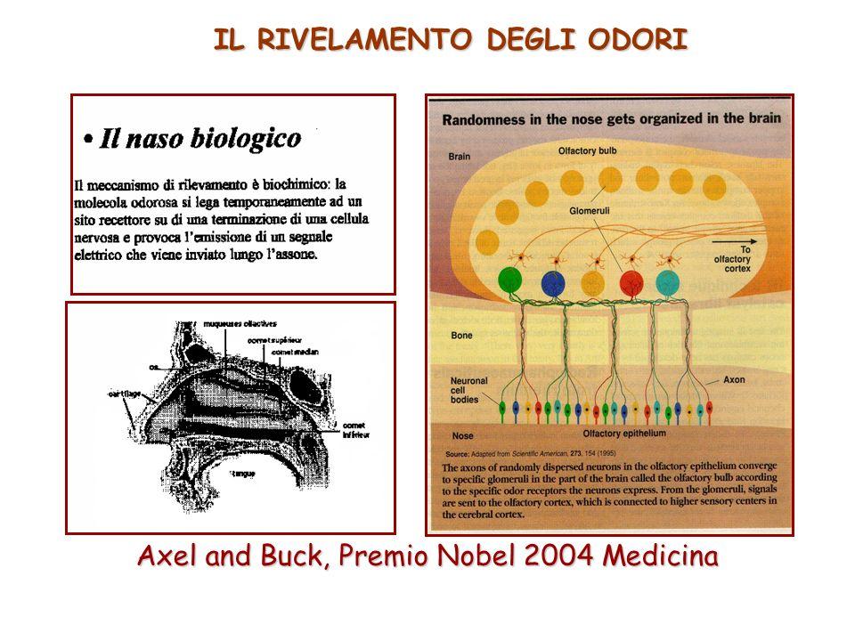 IL RIVELAMENTO DEGLI ODORI Axel and Buck, Premio Nobel 2004 Medicina