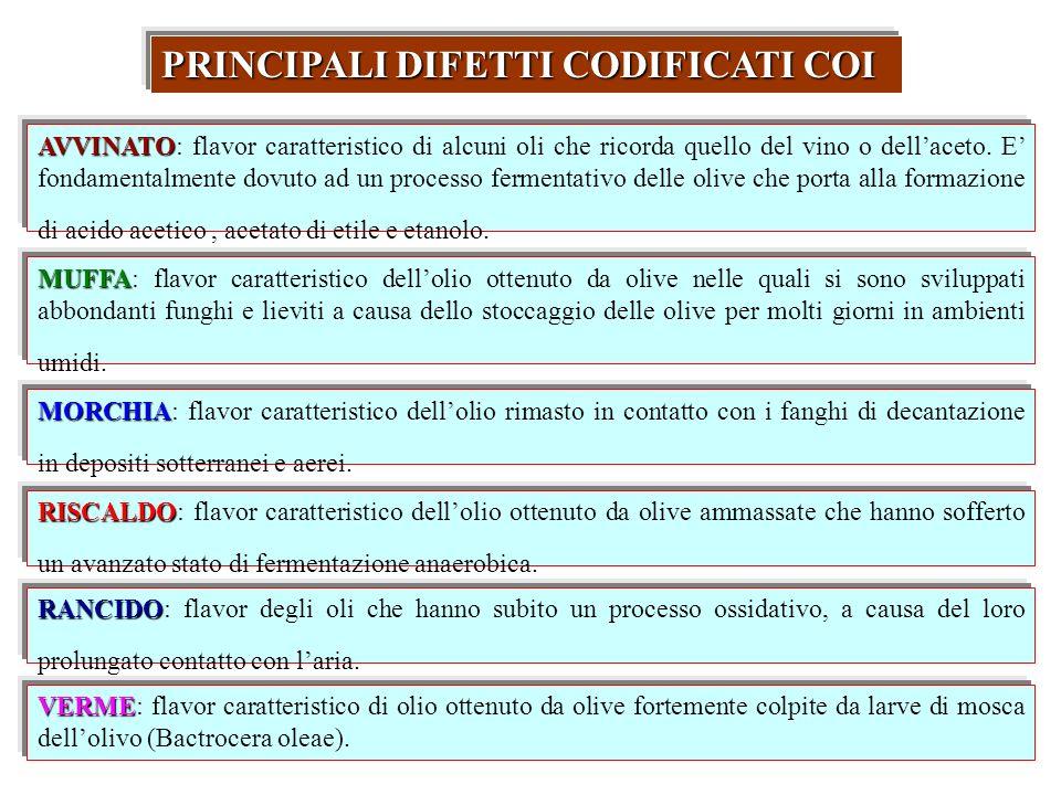 VERME VERME: flavor caratteristico di olio ottenuto da olive fortemente colpite da larve di mosca dellolivo (Bactrocera oleae). PRINCIPALI DIFETTI COD