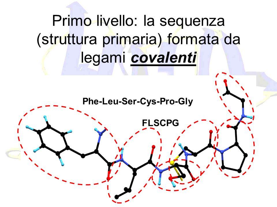 Primo livello: la sequenza (struttura primaria) formata da legami covalenti Phe-Leu-Ser-Cys-Pro-Gly FLSCPG