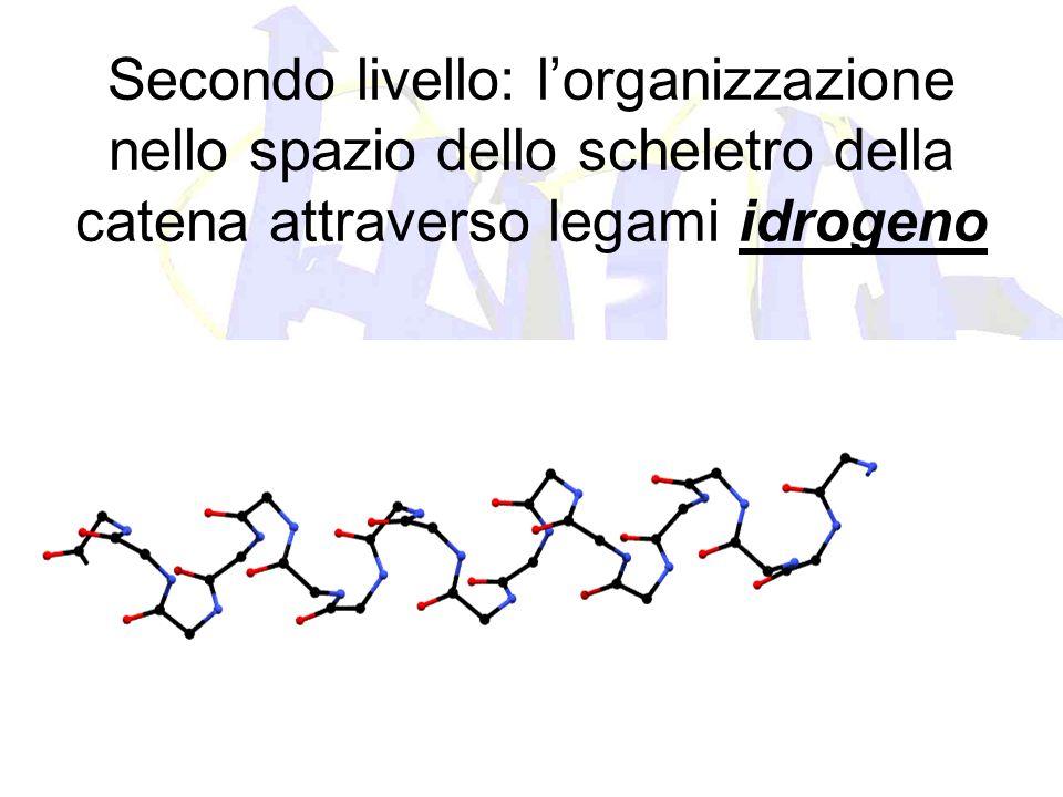 Secondo livello: lorganizzazione nello spazio dello scheletro della catena attraverso legami idrogeno