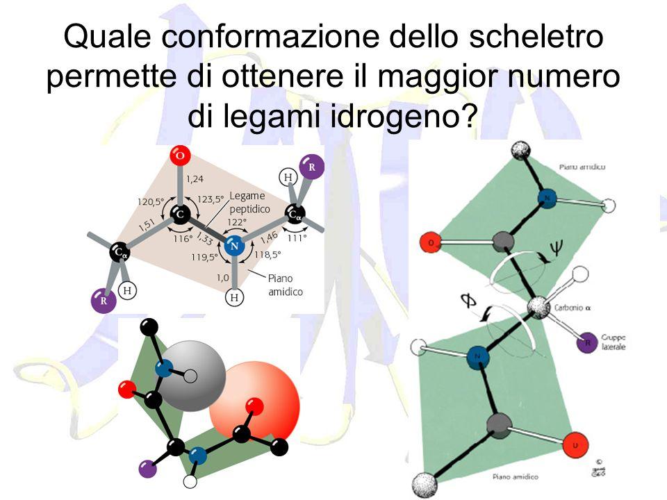 Quale conformazione dello scheletro permette di ottenere il maggior numero di legami idrogeno?