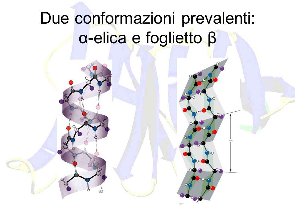 Due conformazioni prevalenti: α-elica e foglietto β