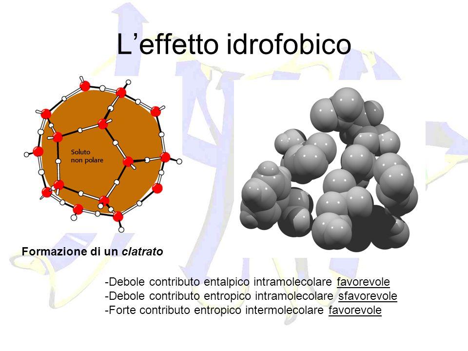 Leffetto idrofobico Formazione di un clatrato -Debole contributo entalpico intramolecolare favorevole -Debole contributo entropico intramolecolare sfa