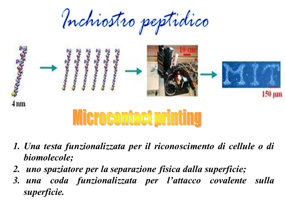1.Una testa funzionalizzata per il riconoscimento di cellule o di biomolecole; 2.