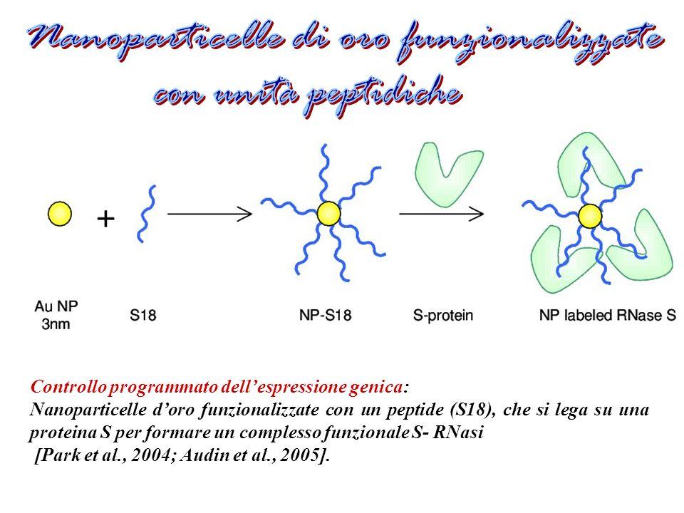 Controllo programmato dellespressione genica: Nanoparticelle doro funzionalizzate con un peptide (S18), che si lega su una proteina S per formare un complesso funzionale S- RNasi [Park et al., 2004; Audin et al., 2005].
