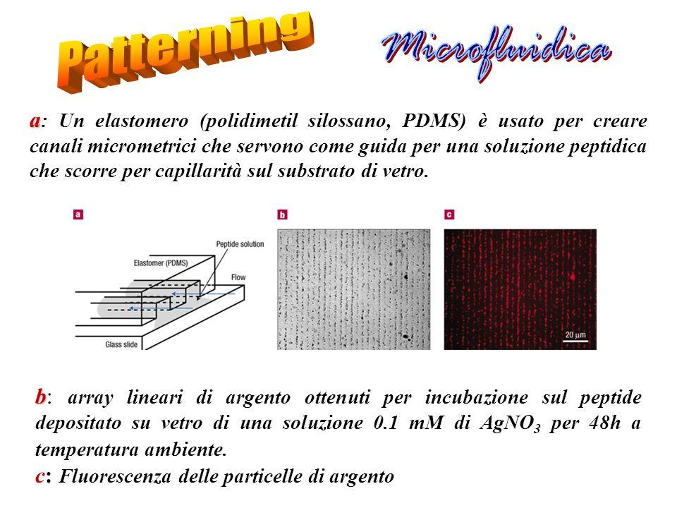 b b: array lineari di argento ottenuti per incubazione sul peptide depositato su vetro di una soluzione 0.1 mM di AgNO 3 per 48h a temperatura ambient