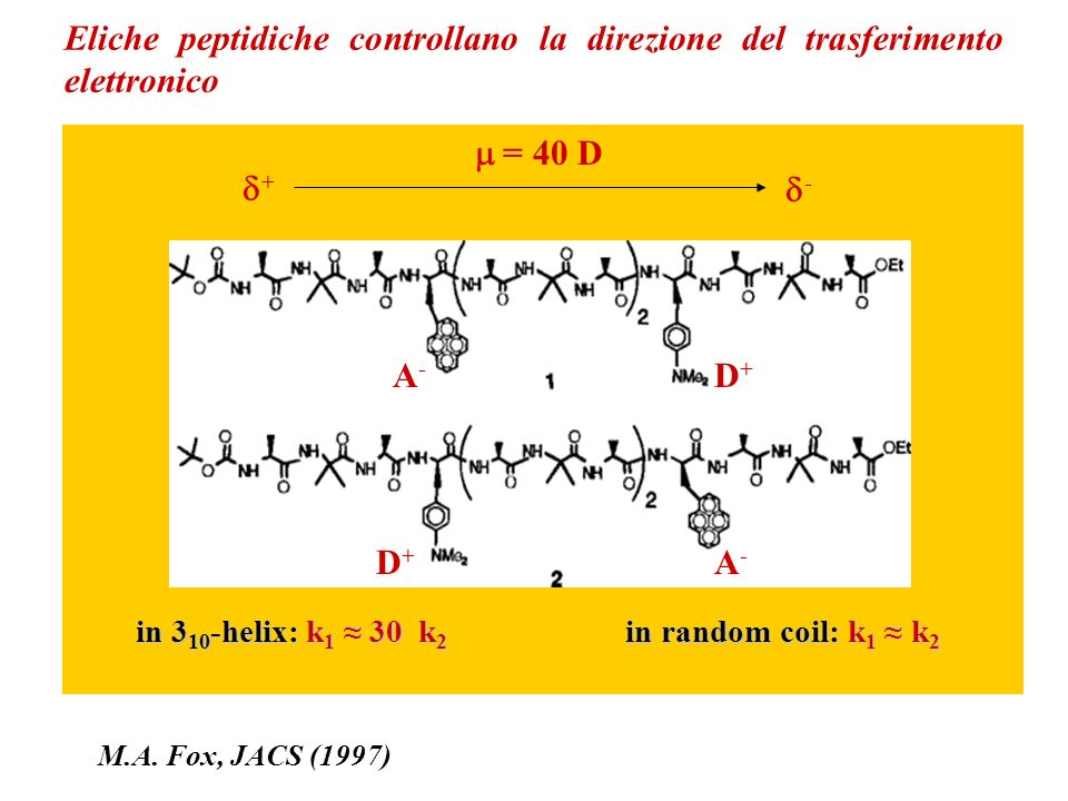 Eliche peptidiche controllano la direzione del trasferimento elettronico A-A- D+D+ A-A- D+D+ + = 40 D - in 3 10 -helix: k 1 30 k 2 in random coil: k 1