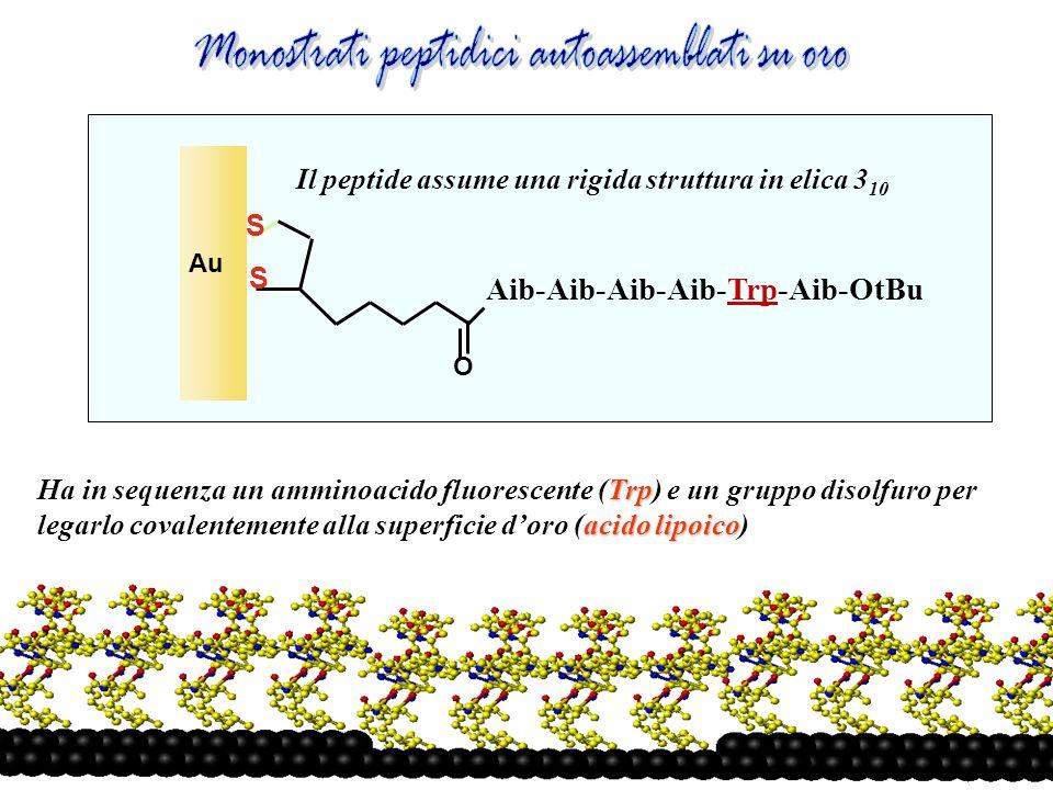 S S O Aib-Aib-Aib-Aib-Trp-Aib-OtBu Au Trp acido lipoico Ha in sequenza un amminoacido fluorescente (Trp) e un gruppo disolfuro per legarlo covalentemente alla superficie doro (acido lipoico) Il peptide assume una rigida struttura in elica 3 10
