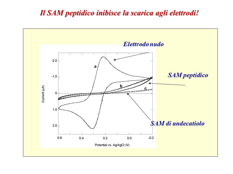 Il SAM peptidico inibisce la scarica agli elettrodi! Elettrodo nudo SAM peptidico SAM di undecatiolo
