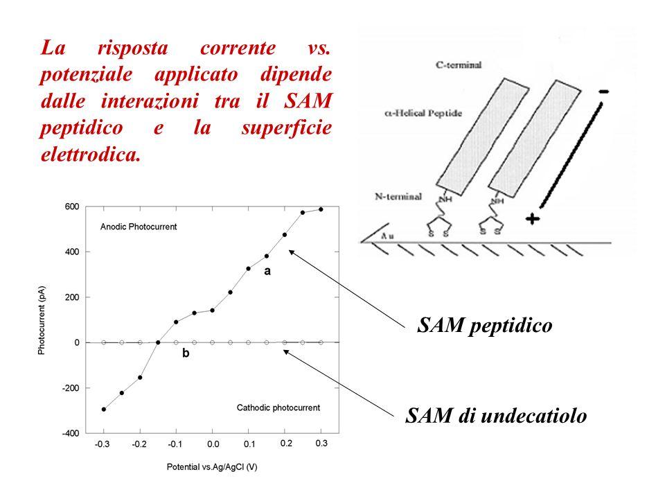 La risposta corrente vs. potenziale applicato dipende dalle interazioni tra il SAM peptidico e la superficie elettrodica. SAM peptidico SAM di undecat
