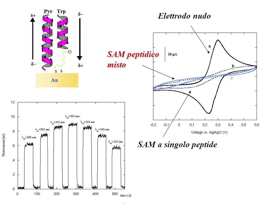 Elettrodo nudo SAM a singolo peptide SAM peptidico misto