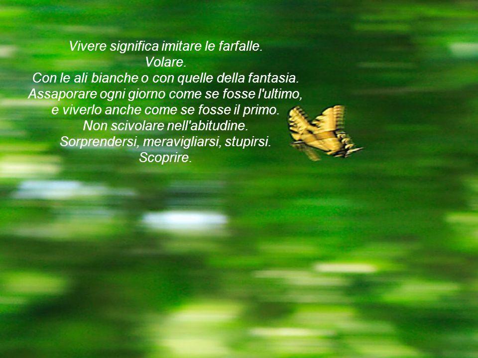 Vivere significa imitare le farfalle. Volare. Con le ali bianche o con quelle della fantasia. Assaporare ogni giorno come se fosse l'ultimo, e viverlo