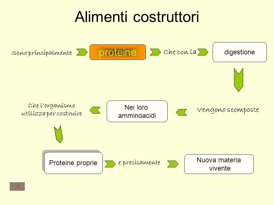 Alimenti costruttori proteine Sono principalmente Che con la digestione Vengono scomposte Nei loro amminoacidi Che lorganismo utilizza per costruire Proteine proprie e precisamente Nuova materia vivente torna