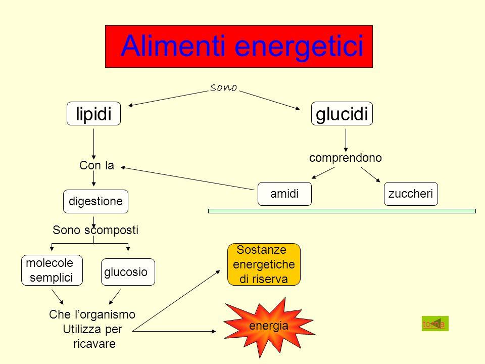 Alimenti energetici sono lipidiglucidi comprendono amidizuccheri Con la digestione Sono scomposti molecole semplici glucosio Che lorganismo Utilizza per ricavare Sostanze energetiche di riserva energia torna