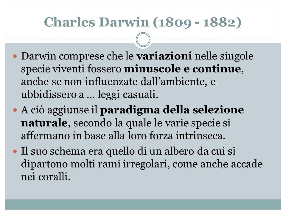 Charles Darwin (1809 - 1882) Darwin comprese che le variazioni nelle singole specie viventi fossero minuscole e continue, anche se non influenzate dal