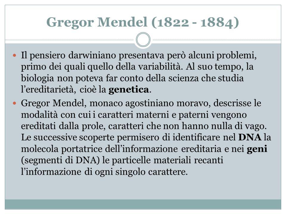 Gregor Mendel (1822 - 1884) Il pensiero darwiniano presentava però alcuni problemi, primo dei quali quello della variabilità. Al suo tempo, la biologi