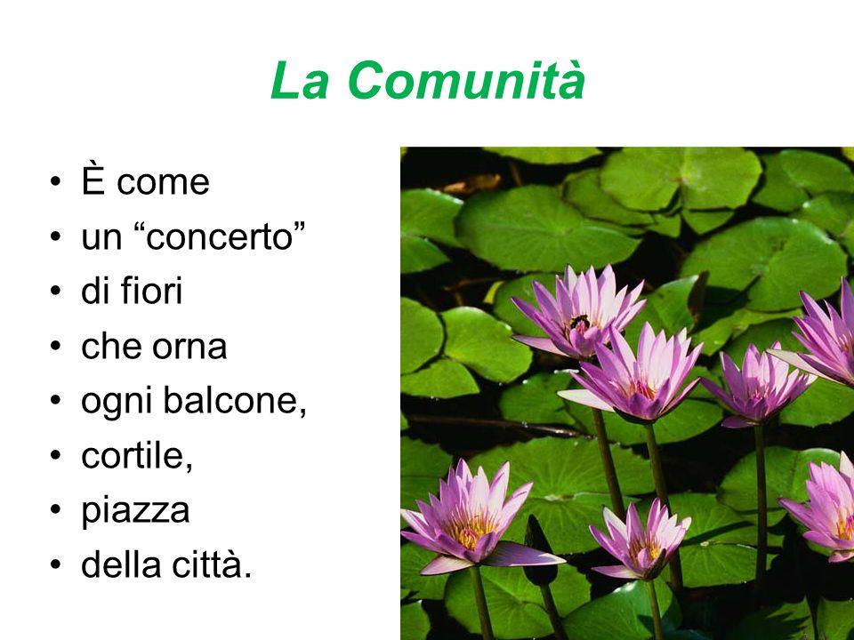 La Comunità È come un concerto di fiori che orna ogni balcone, cortile, piazza della città.
