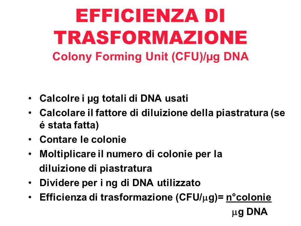 EFFICIENZA DI TRASFORMAZIONE Colony Forming Unit (CFU)/µg DNA Calcolre i µg totali di DNA usati Calcolare il fattore di diluizione della piastratura (