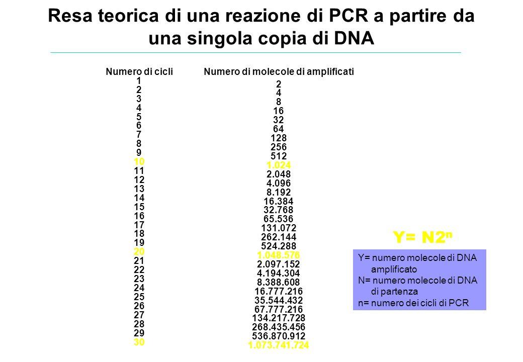 Numero di cicli 1 2 3 4 5 6 7 8 9 10 11 12 13 14 15 16 17 18 19 20 21 22 23 24 25 26 27 28 29 30 Numero di molecole di amplificati 2 4 8 16 32 64 128