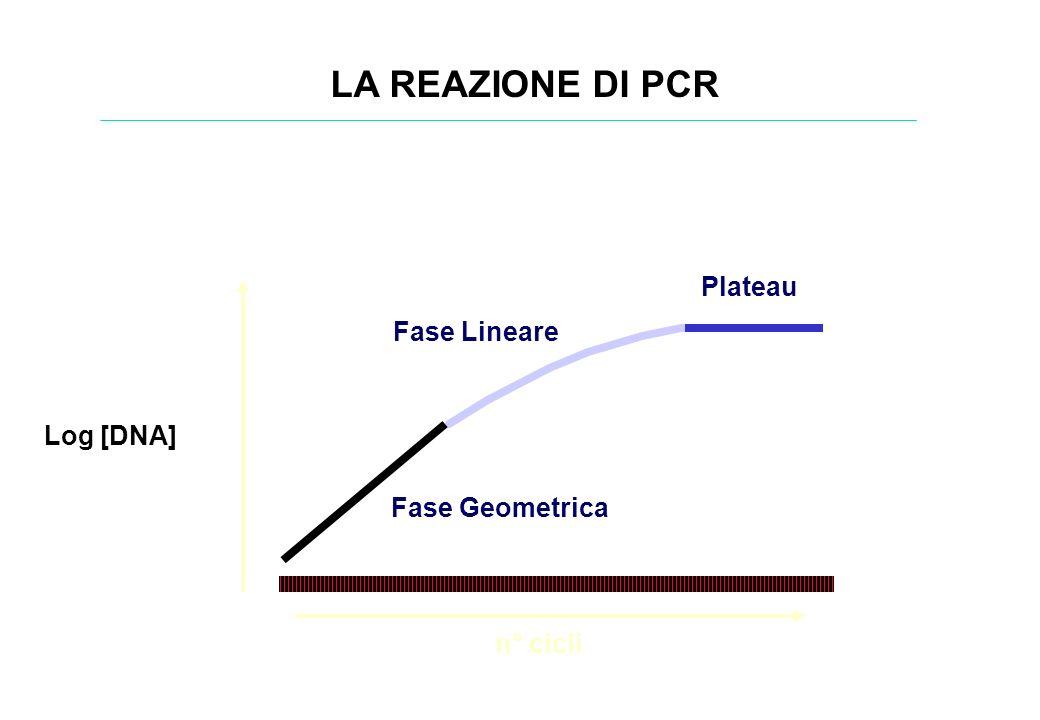 Log [DNA] n° cicli Fase Geometrica Plateau Fase Lineare LA REAZIONE DI PCR