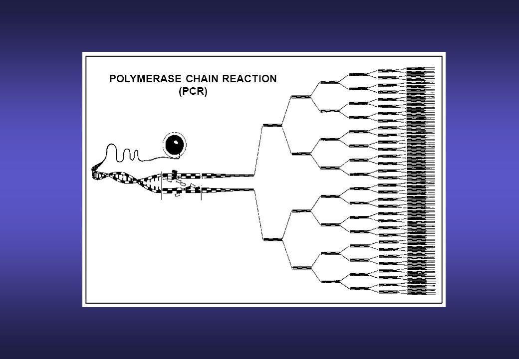 ESTENSIONE Lunghezza della sequenza amplificata Tipo di strumento impiegato Estensione finale di 5-10 minuti 72°C per 15-60 secondi POLIMERIZZAZIONE DI NUOVE MOLECOLE COMPLEMENTARI AL DNA TARGET