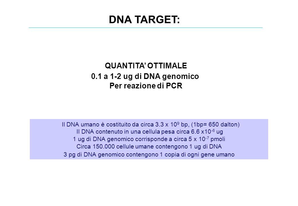 DNA TARGET: Il DNA umano è costituito da circa 3.3 x 10 9 bp, (1bp= 650 dalton) Il DNA contenuto in una cellula pesa circa 6.6 x10 -6 ug 1 ug di DNA g