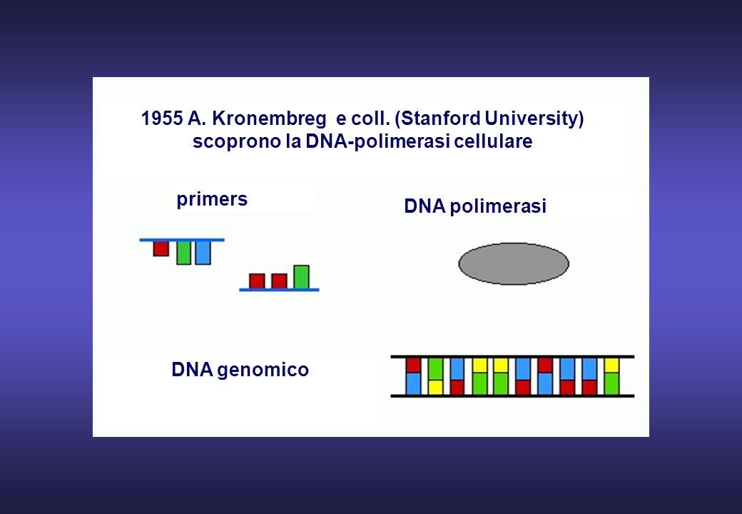 Varia a seconda del numero di copie iniziali di DNA target e della sensibilità richiesta: 1 ug DNA genomico (150.000 copie) 25 cicli 10.000 copie 30 cicli 1.000 copie 34 cicli 100 copie 38 cicli 10 copie 42 cicli NUMERO DEI CICLI N.B.