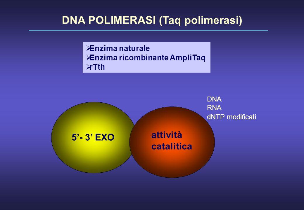 Enzima naturale Enzima ricombinante AmpliTaq rTth 5- 3 EXO attività catalitica DNA RNA dNTP modificati DNA POLIMERASI (Taq polimerasi)